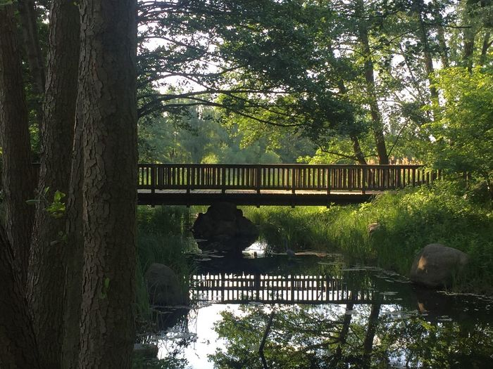 Stream Tree Plant Connection Bridge Architecture Growth Nature Water Built Structure Bridge - Man Made Structure No People Forest Green Color Day Trunk Tree Trunk Tranquility Outdoors Railing Footbridge