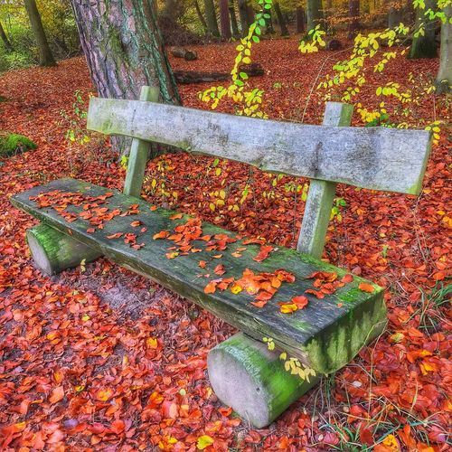 Bench in Fall Season Leaf High Angle View No People Day Autumn Outdoors Nature Beauty In Nature Moss Bench Leaves Red Leaves Fall Forest Forestwalk