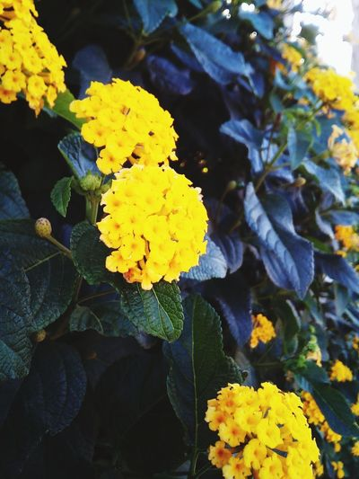 Jaune Nature Photography Nature Plante Jolie Fleur Fleur Fleur Jaune Vie Calme Photography Flower Head Flower Yellow Leaf Multi Colored Petal Close-up Plant Plant Life A New Beginning