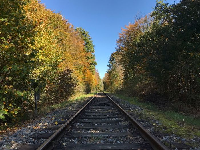 View of railroad tracks amidst trees against clear sky