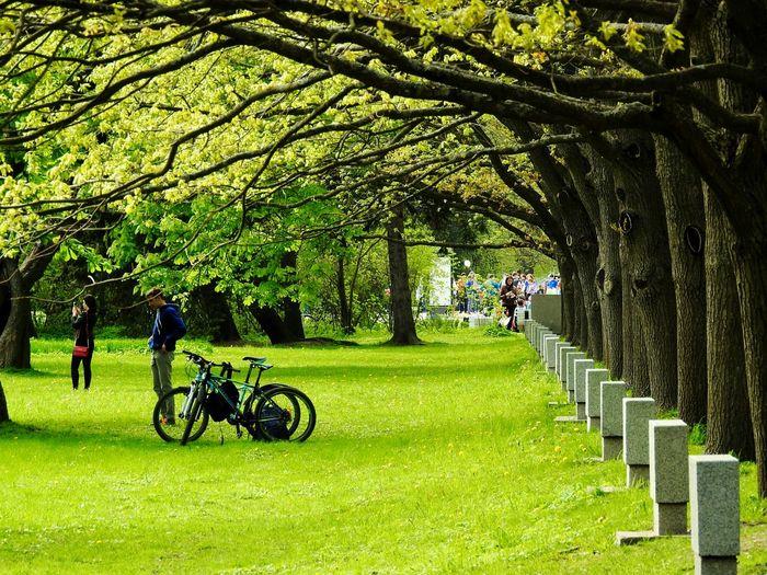 Greeny  The Great Outdoors - 2017 EyeEm Awards Walking Springtime Forest Photography Park Greenyatmosphere Bikes Colors Of Sankt-Peterburg Sankt-Petersburg Russia