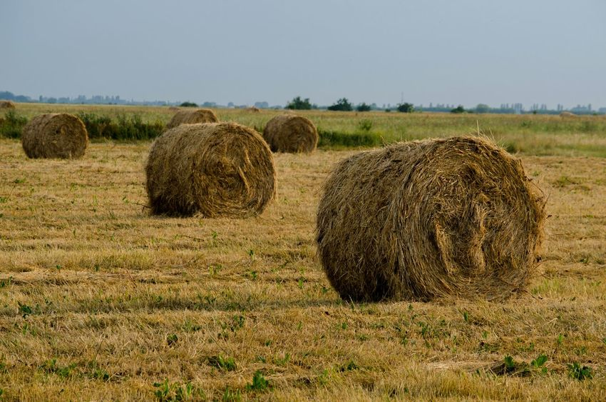 Hay Bale  Field Fieldscape Landscape Agriculture Countryside Summer Drygrass Grass