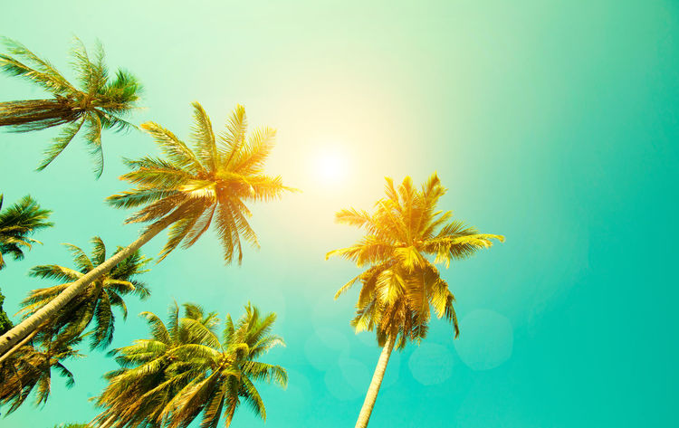 Palm trees against blue sky with the pastel sky colour . Hello Summer Holiday Old Fashioned Backgrounds Beach Coconut Palm Tree Pastel Retro Styled Sky Summer Vacation