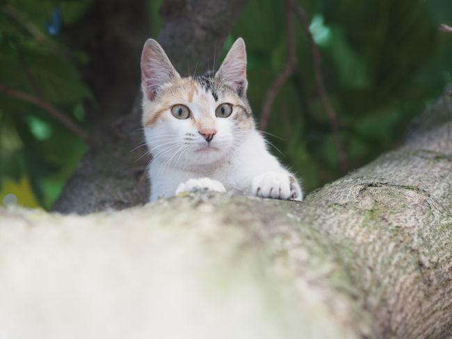 Cat Cat Lovers Cat On The Tree Catsofinstagram Cat♡ Tree