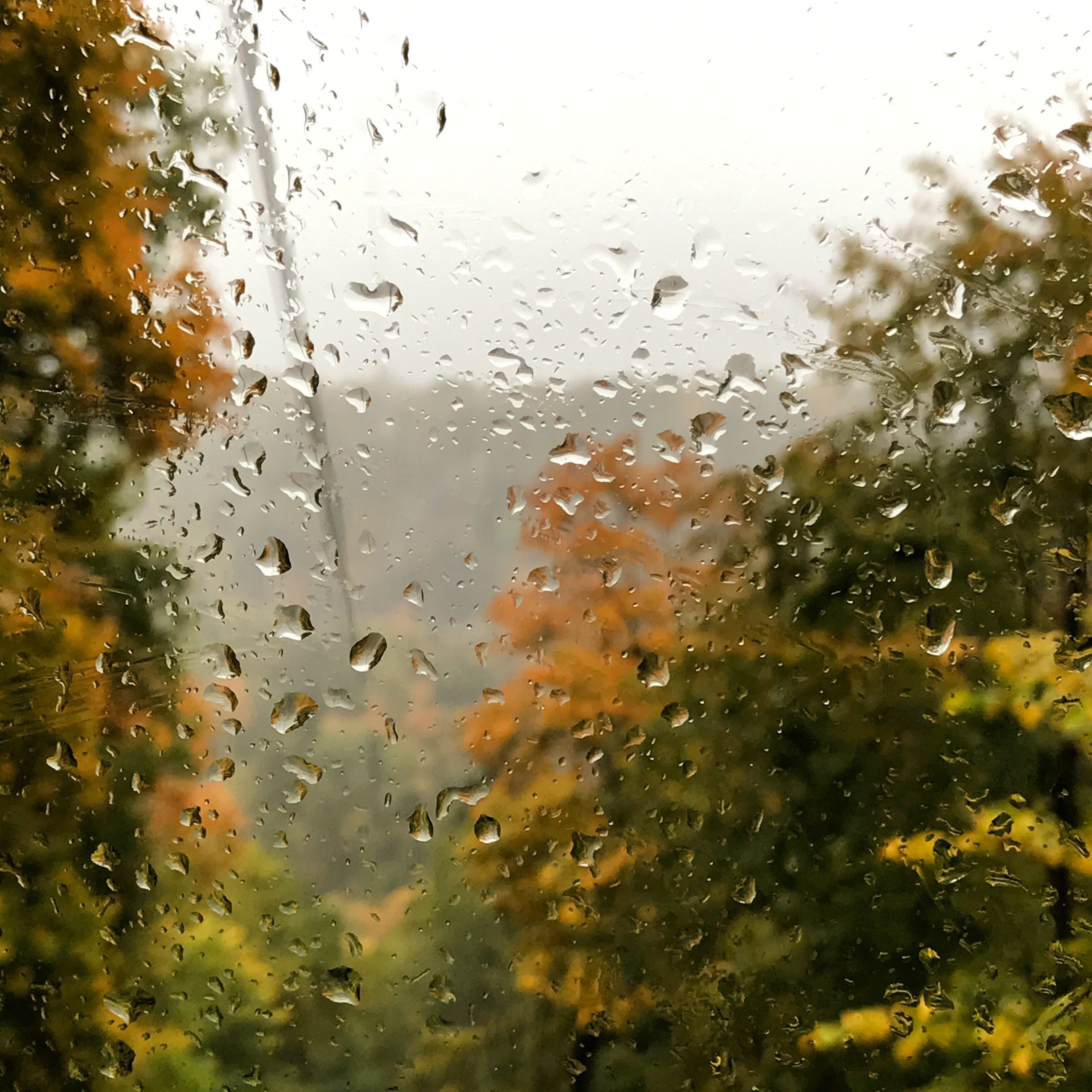 glass - material, drop, window, transparent, wet, weather, water, backgrounds, rain, close-up, condensation, no people, full frame, raindrop, day, tree, sky, rainy season, nature, indoors