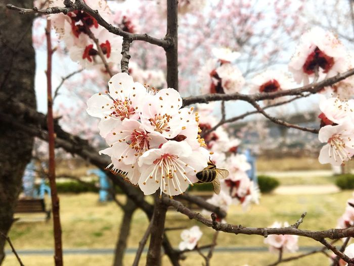 Plant Flowering Plant Flower Growth Tree Beauty In Nature Freshness