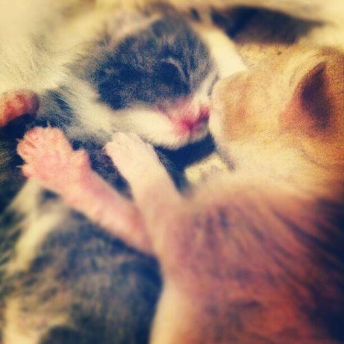 Kitten love Adorableasfuck