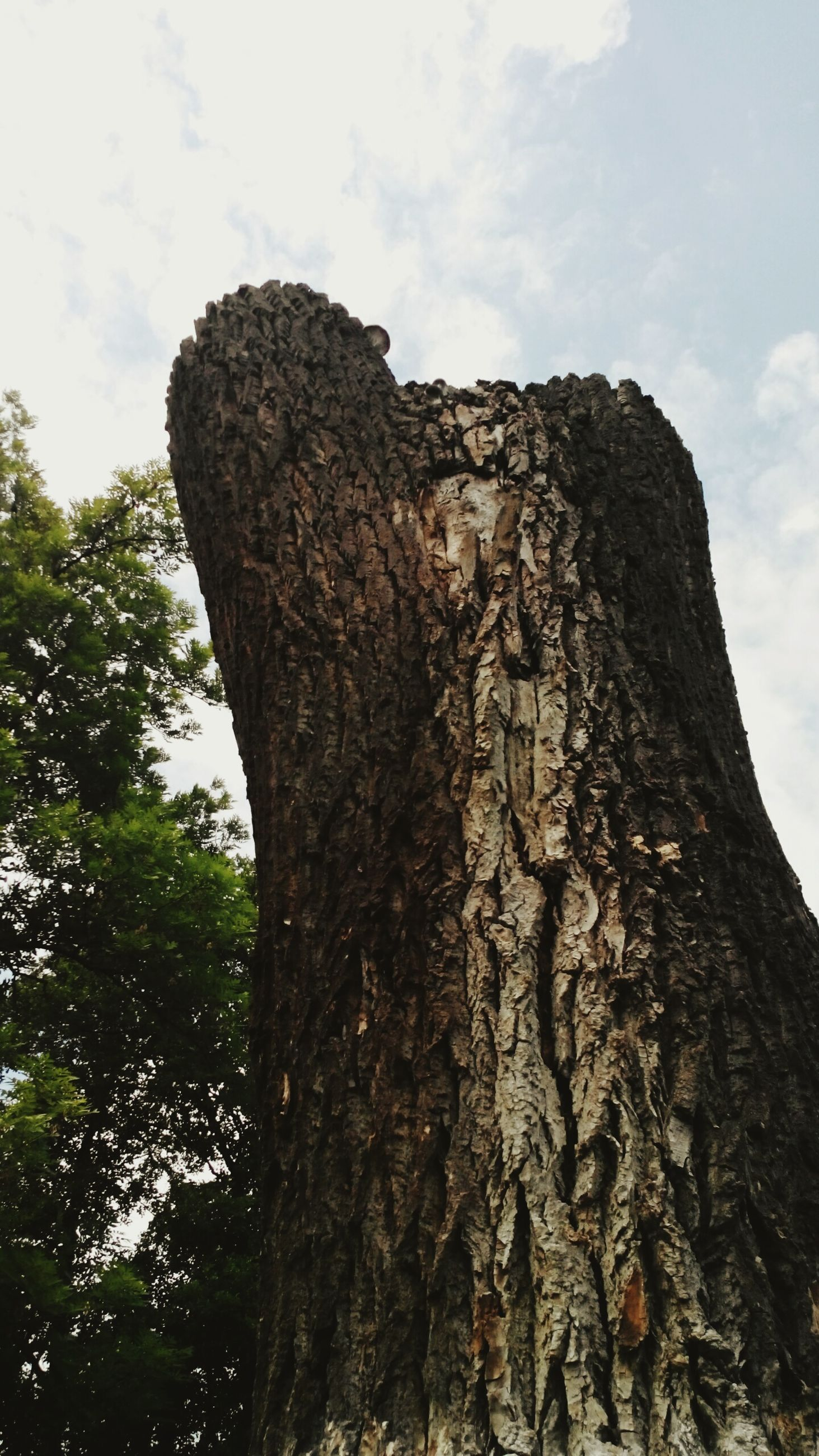 tree, low angle view, tree trunk, sky, textured, nature, tranquility, bark, growth, rough, natural pattern, close-up, day, beauty in nature, outdoors, no people, branch, tranquil scene, cloud - sky, wood - material