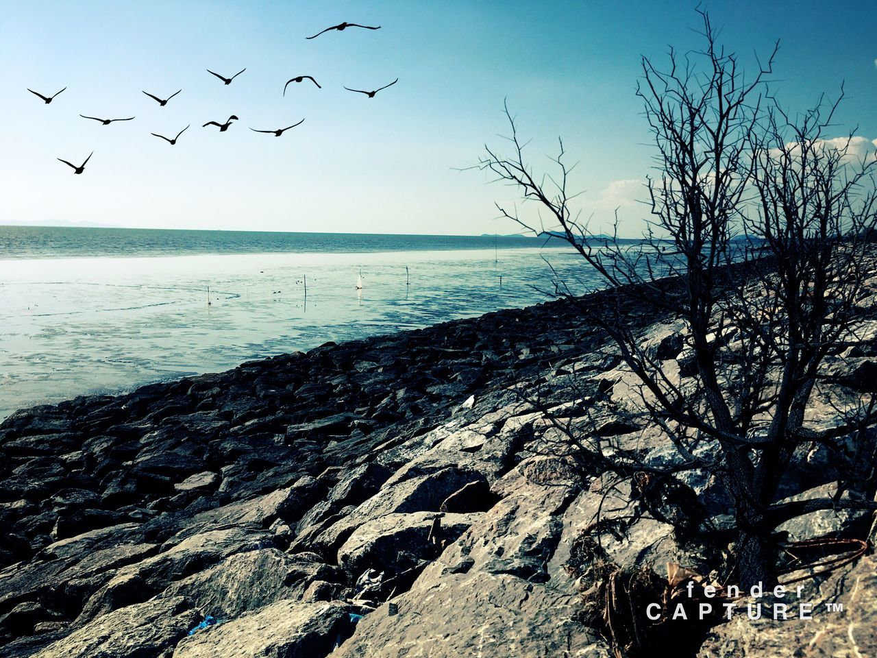 sea, nature, flock of birds, bird, beauty in nature, horizon over water, water, scenics, flying, large group of animals, tranquil scene, sky, tranquility, no people, animal themes, outdoors, animals in the wild, day, tree