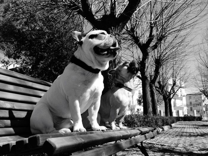Dogs Sitting On Bench By Trees At Park