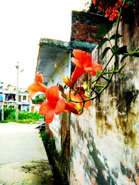 Beauty In Nature Plant Nature