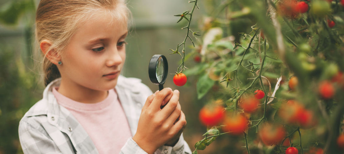 A beautiful little girl examines small cherry tomatoes through a magnifying glass. curious children.