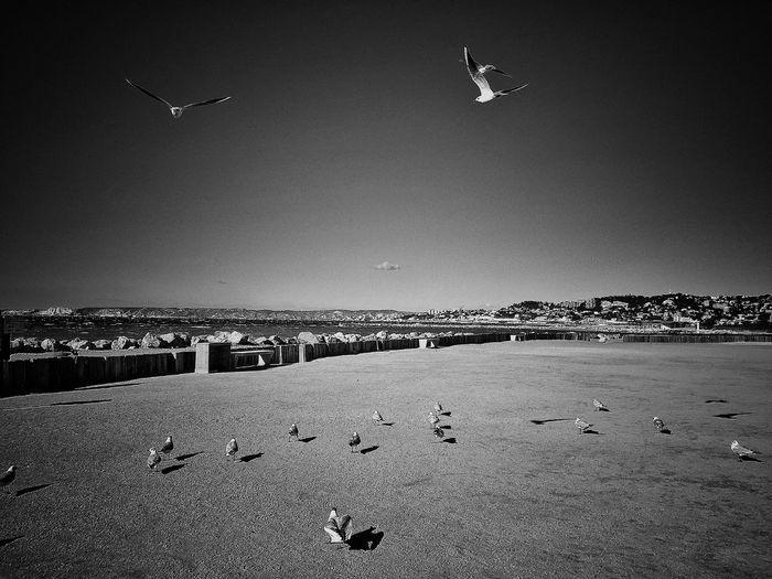 Birds against sky on sunny day