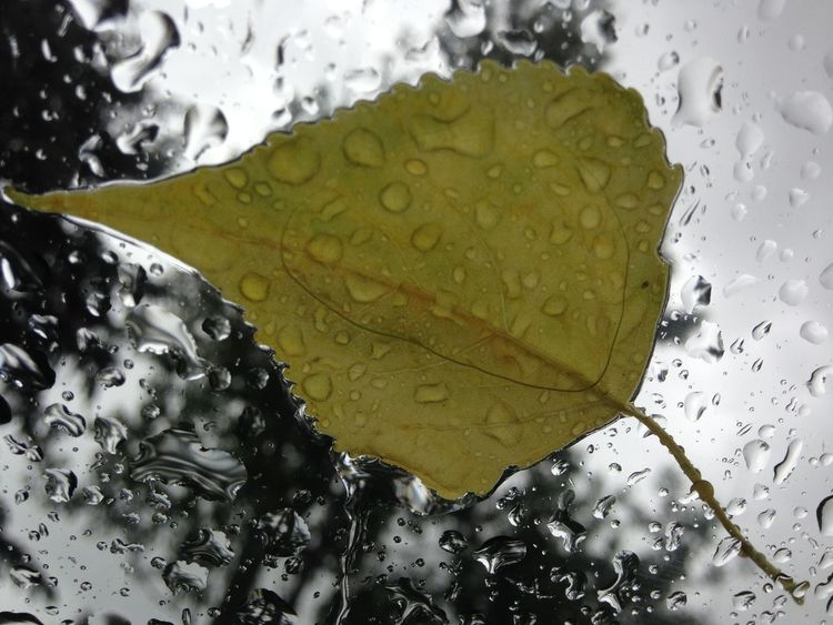 Pattern Pieces Rain On Windshield Rain On Leaf Water Drops Rain Drops Fall Leaf IPhoneography