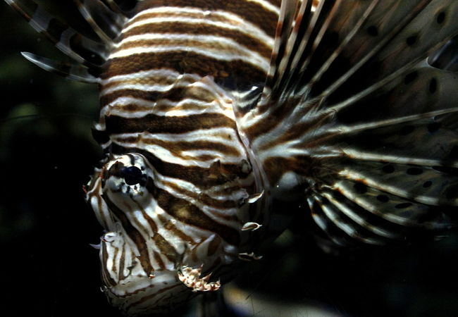 Animal Markings Animal Themes Animal Wildlife Animals In The Wild Close-up Fish Nature No People One Animal Sea Life UnderSea Underwater Water