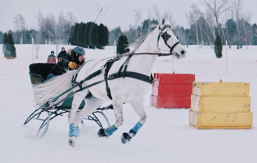 Snow Winter Cold Temperature Leisure Activity Lifestyles Domestic Animals Mammal One Person Animal Themes Outdoors Day Sky Nature Nature Horse Riding Horse Life Horse Photography  Horseback Riding Working Animal Horse Racing Horses Horseriding Horse Winter