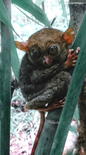 Philippine Tarsier Pets Domestic Cat Domestic Animals No People Close-up Nature Day