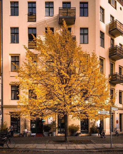 Yellow Tree Autumn Building Exterior Architecture Leaf Outdoors Change Street City City Life Built Structure Tree Day Façade Yellow Luxury Modern Travel Destinations Multi Colored No People Cityscape Berlin Prenzlauer Berg