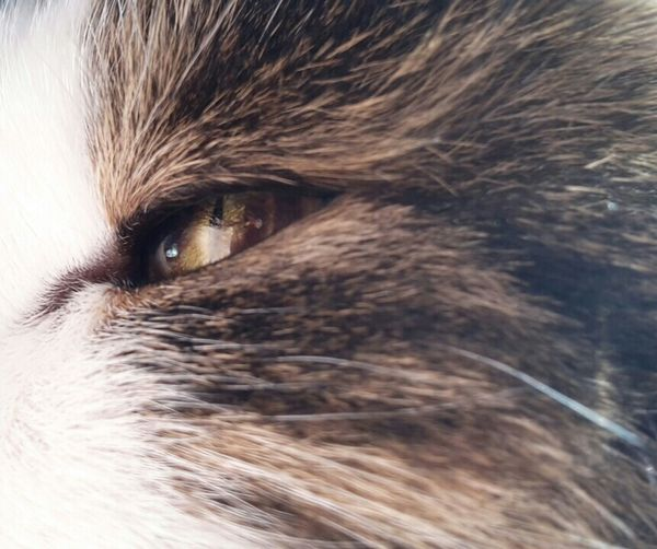 ~The Eye Of The Cat Eye Cat No Filter~