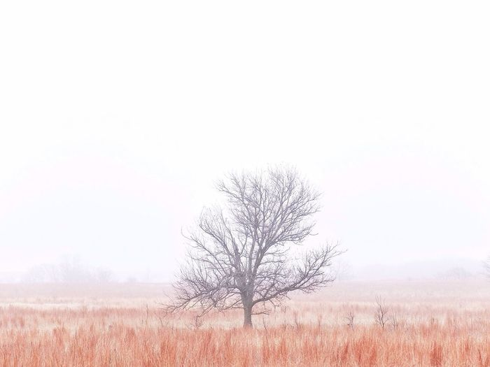 Scenic view of field in foggy weather