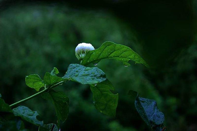Leaf Animal