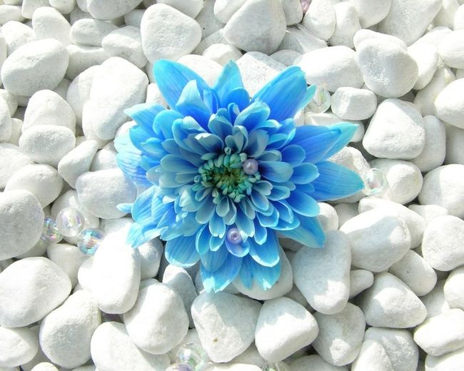Beautiful Flower, Natural Color, Checkthisout! Naturebeauty Blueflower