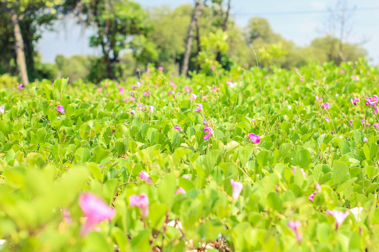 Plant Flower Flowering Plant Growth Green Color Beauty In Nature Field Selective Focus Land Freshness Fragility Vulnerability  Day Nature No People Leaf Close-up Outdoors Plant Part Grass Flower Head Flowerbed