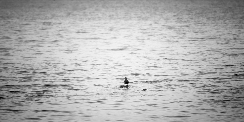 Silhouette man swimming in sea