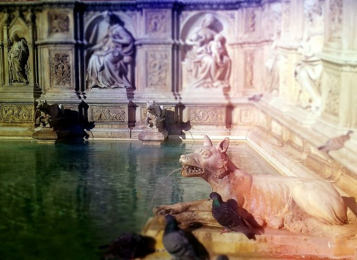 Finding New Frontiers Water Pool Birds🐦⛅ Wolfdog Wildlife & Nature Colorful Nature Edited Siena..❤ Sohan Mobilephotography Lovely Place Del Campo Di Siena Fountain Animal Themes Animal Photography Waterbattle Water Surface Architecture Legendary Old Buildings Animal Sculptures Italy🇮🇹 Tuscany Art Is Everywhere Been There.