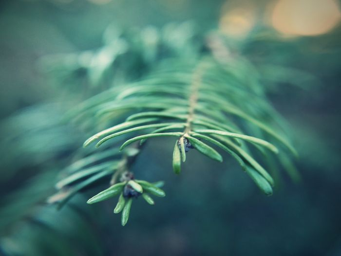 Nature Close-up Plant Leaf Green Color Freshness Beauty In Nature Delicate Soft Focus Outdoors