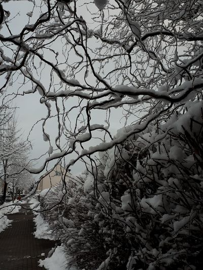 Tree Branch Backgrounds Winter Sky Close-up Bare Tree Dead Plant Dried Plant Twig Snow Covered Weather Snowfall Cold