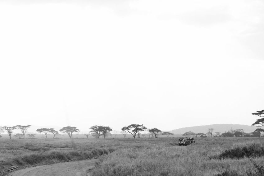Afica African Beauty In Nature Black And White Clear Sky Copy Space Copy Space Countryside Growth Landscape Monochrome Mountain Nature No People Outdoors Remote Safari Scenics Serengeti Serengeti National Park Serengeti, Tanzania Solitude Space For Text Tranquil Scene Tranquility