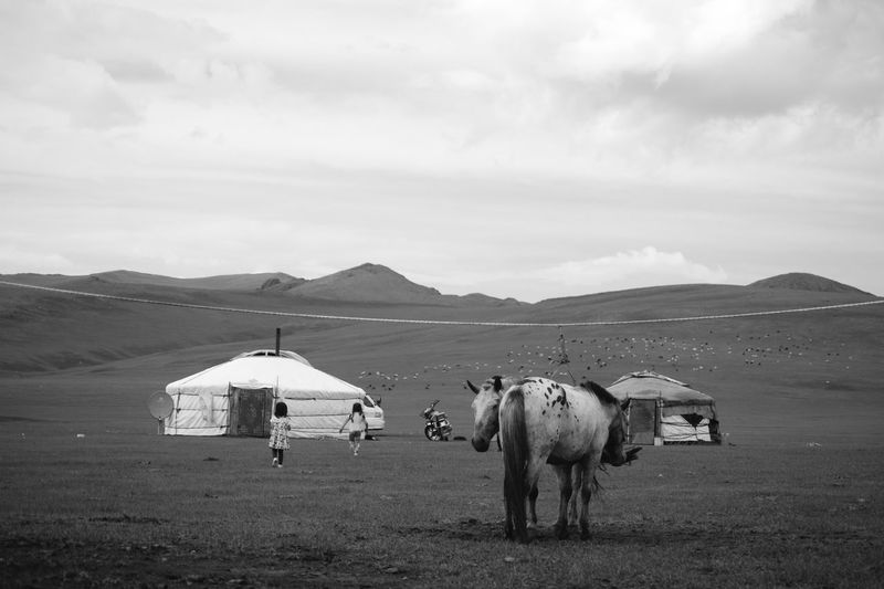 Mongolia Animal Animal Themes Beauty In Nature Black And White Cloud - Sky Domestic Animals Environment Horse Land Landscape Mammal Mountain Nomadic Nomadic Life Outdoors Sky Steppe Yurt Монгол улс гэр