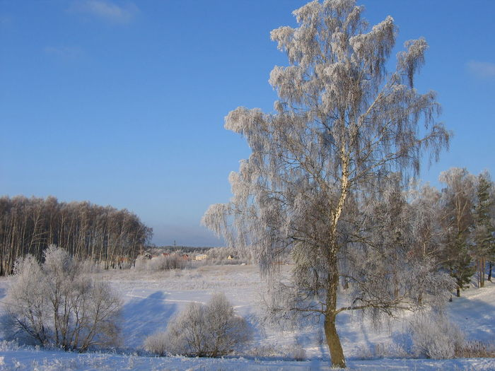 Frozen Trees On Field Against Sky On Sunny Day