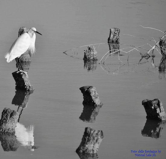 Bird Photography Birds Eye View Birds Wildlife Cagliari, Sardinia
