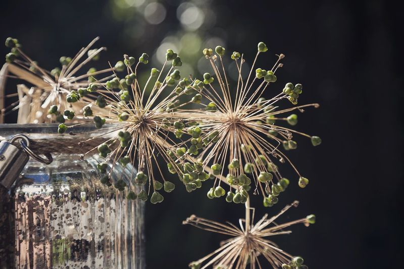 Plants Background Nature Vase Seeds Outdoors Garden Life Scotland Canon Plants And Flowers Prints Prints Of Nature Bokeh Bokehlicious Bokeh Love Green Plant Seeds Of Life