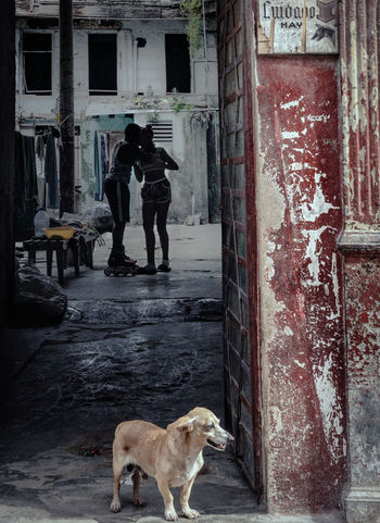 Protected Romance Cuba Collection Cuban Street Havana Kiss Romance Cuba Collections Cuban Life Dog Domestic Animals Door Pets Standing EyeEmNewHere