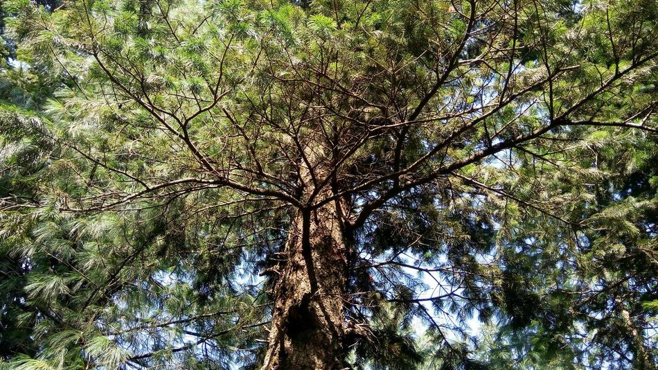 Pakistani Traveller Murree, Pakistan Tree Growth Low Angle View Nature Full Frame Backgrounds No People Beauty In Nature Green Color Tranquility Outdoors Sky Day Close-up