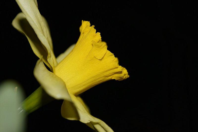 Yelow Flowers Photoofthenight