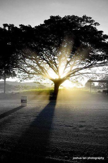 Treeoflights Treeofknowledge Lights God Is Great. God's Beauty