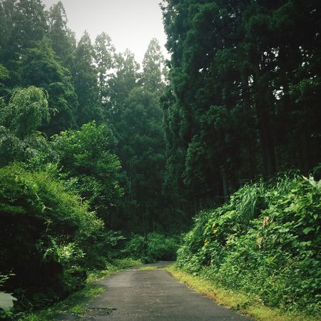 Forest Akita Nice Smelling Akita Pref. Yuzawa City Japan In The Forest Relaxing Healing
