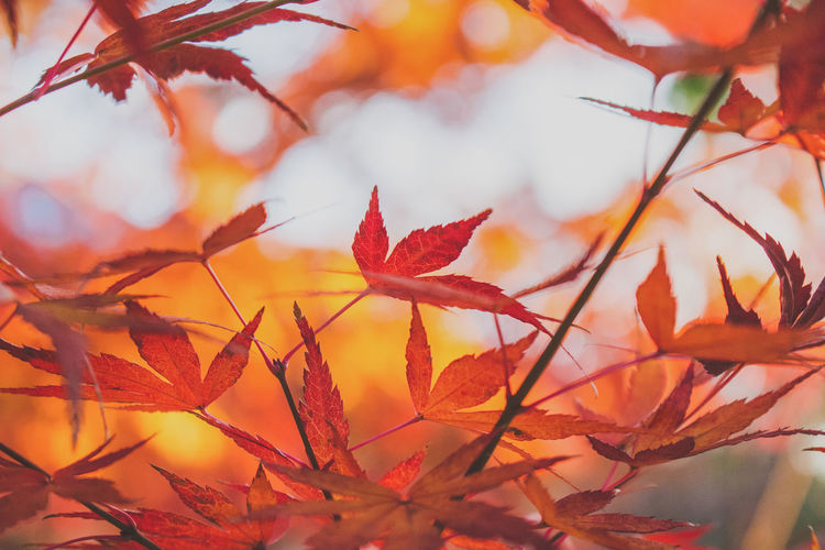 Close-up of dry autumn leaves on twigs