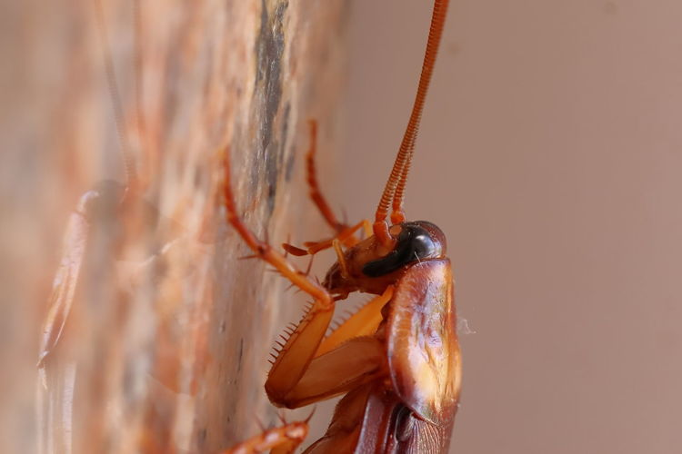 Macro shot of cockroach on the granite stone, insect image