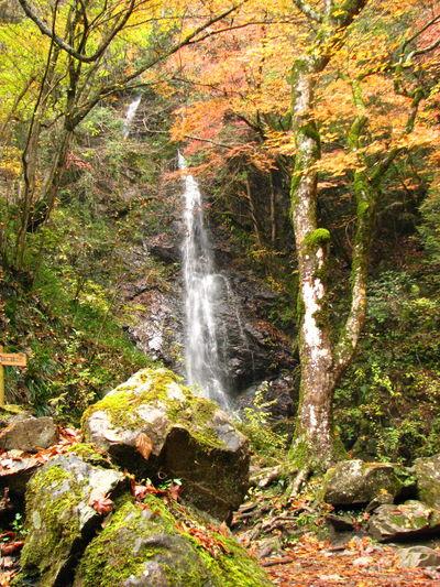 払沢の滝 EyeEm Nature Lover Nature Japan Fall Colors