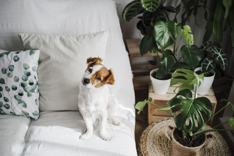 Dog sitting on sofa at home