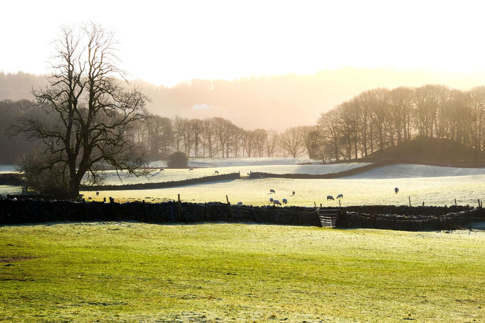 Lake District Lake District Hills Lake District National Park Lake District Scene Bare Tree Beauty In Nature Clear Sky Day Golf Golf Course Grass Green - Golf Course Green Color Growth Lake Landscape Nature No People Outdoors Scenics Sky Tranquil Scene Tranquility Tree Water