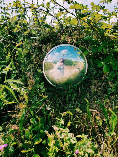 selfie Mirror Reflection Mirror Water Leaf Circle Close-up Grass Round Growing Blooming Circular
