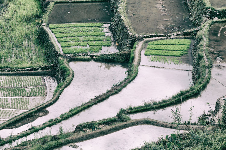 Rice Banaue Philippines Terrace Mountain Nature Ifugao ASIA Field Landscape Travel Agriculture Valley Black Farm Vietnam Food China Asian  Plantation Heritage World Village Rain Wind River Fog Plant Unesco Environment Bali Batad Land Ecology Hiking View Amazing Luzon Cultivation White Province Sapa County Blur Leaf Ground Horticulture Beautiful Rough House