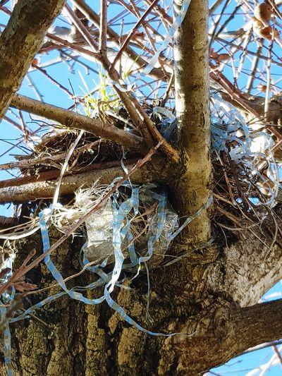 nid plastique Birds Recuperation Plastic Pollution End Plastic Pollution Tree Branch Complexity Sky Close-up