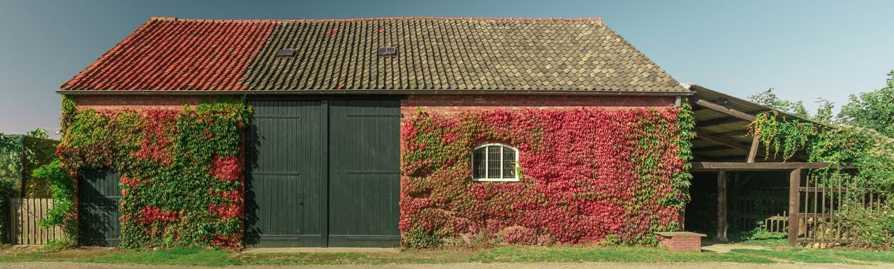 Panorama composed of 4 individual pictures of a barn/shed with beautiful autumn colored ivy. EyeEm Market © Autumn Autumn Colors Barn Panorama Shed Sunlight The Netherlands Zeeland  Zeeuws Vlaanderen